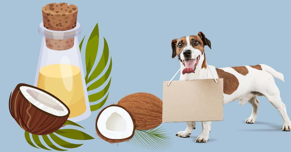 dogs with coconut