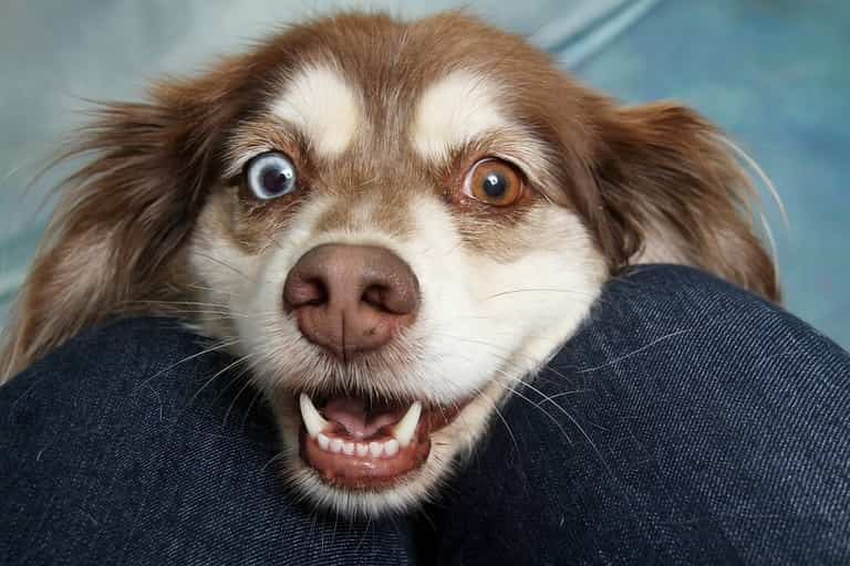 What causes dogs to sneeze?