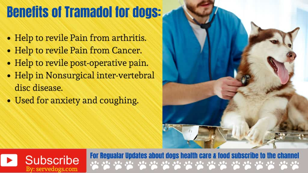 Benefits of Tramadol for dogs