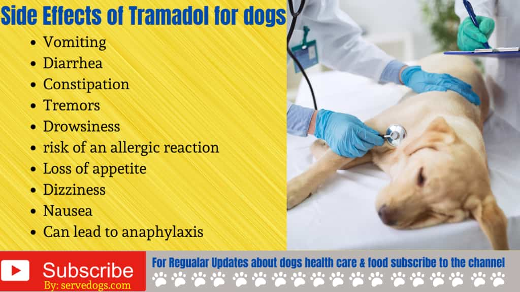 Side Effects of Tramadol for dogs