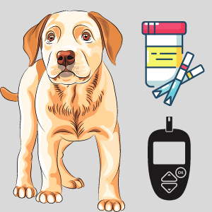 Can I test my dog for Diabetes at Home?