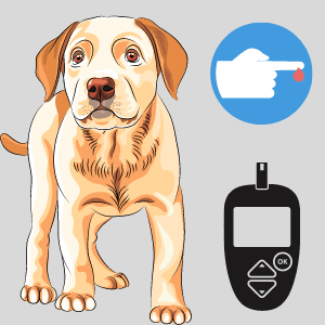 Can I use a human Glucometer for a Dog?