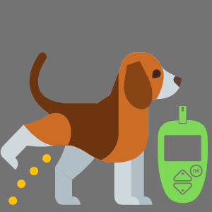 Why do diabetic dogs pee in the House?