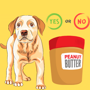 Is Peanut butter Good for Diabetic dogs?