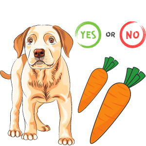 Are carrots good for dogs with Diabetes?