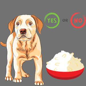 Is Rice suitable for Diabetic Dogs?