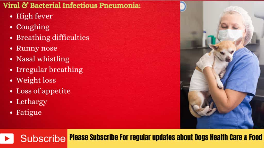 Symptoms of  viral & Bacterial Infectious Pneumonia in Dogs