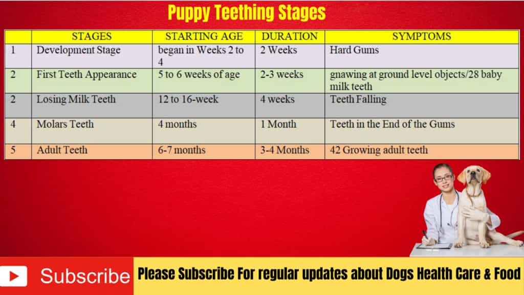 Puppy Teething Age Chart