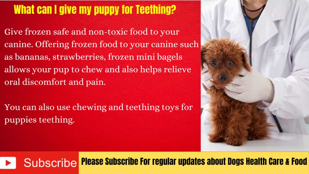 What can I give my puppy for Teething