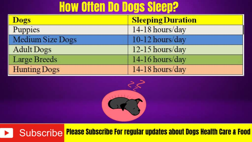 sleeping schedule in dogs