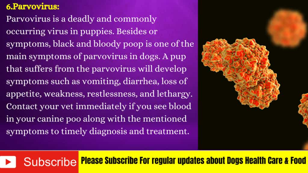 parvovirus blood in dog stool
