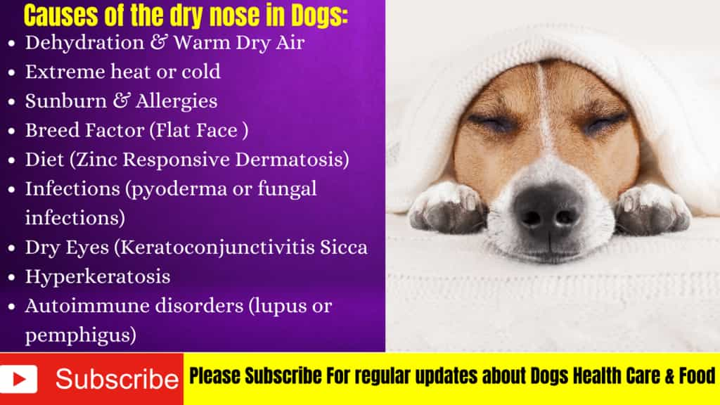 dogs dry nose causes