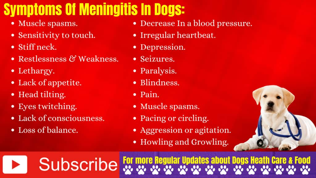 Signs and Symptoms of Meningitis In Dogs