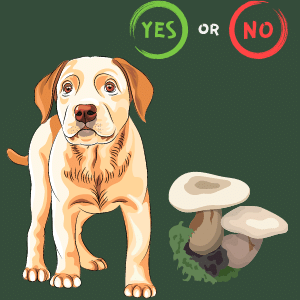 Can dogs eat Portobello Mushrooms