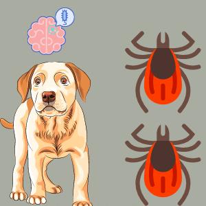 Can ticks cause Meningitis in Dogs?