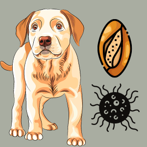 How do you treat a yeast infection in a dog's private Area