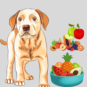 11 Tonic Fruits that Dogs can Eat- Serving Ideas