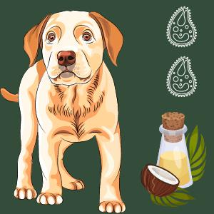 coconut oil for dogs Giardia