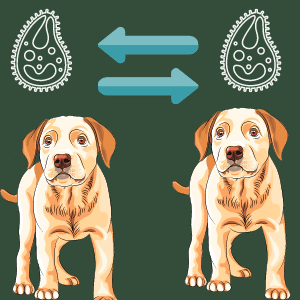Is Giardia contagious from dog to dog