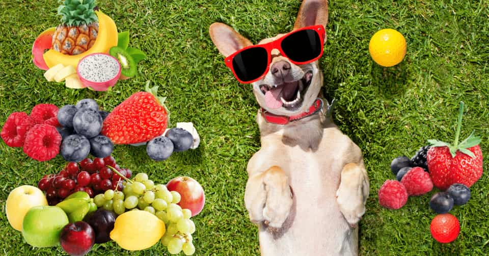 safe fruits for dogs