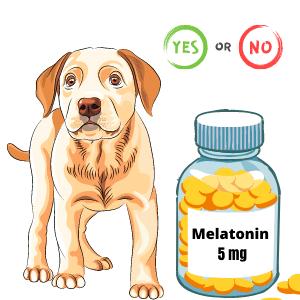 5 mg melatonin for dogs
