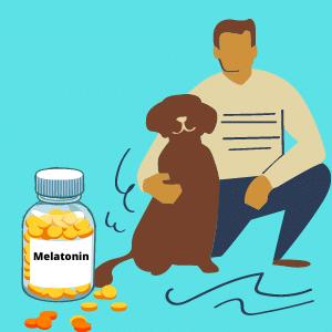 melatonin for calming dogs