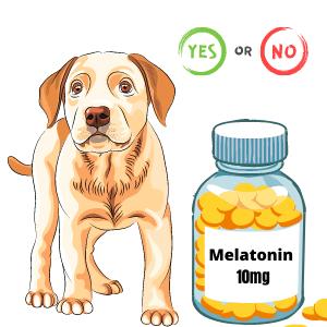 10 mg of melatonin for dogs