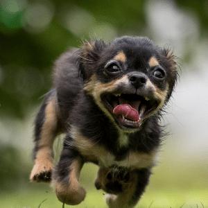 dog crazy running