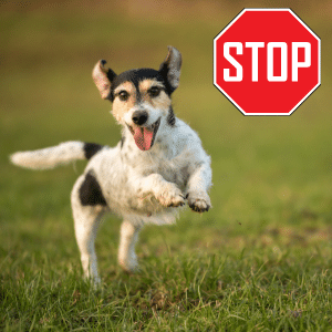 puppy zoomies stop