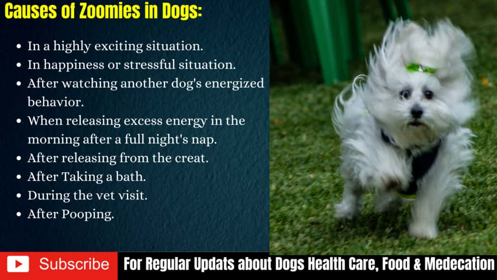 Causes of Zoomies in Dogs