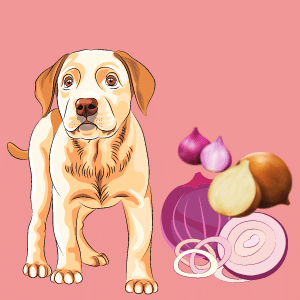 What can I do at Home if my Dog ate Onions