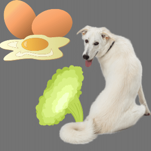 Do eggs cause gas in dogs