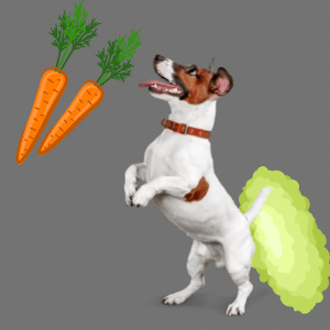 carrots cause gas in Dogs
