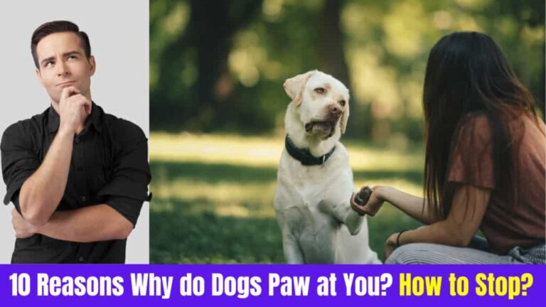 Why do Dogs paw at you