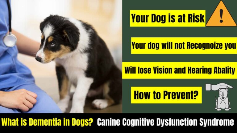 What is Dementia in dogs