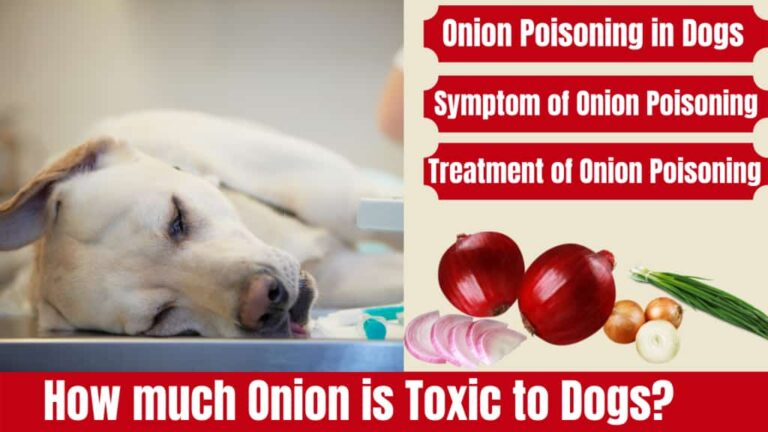 How Much Onion Is Toxic to Dogs