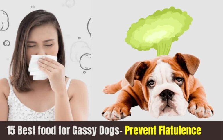 best dog Foods for gassy dogs