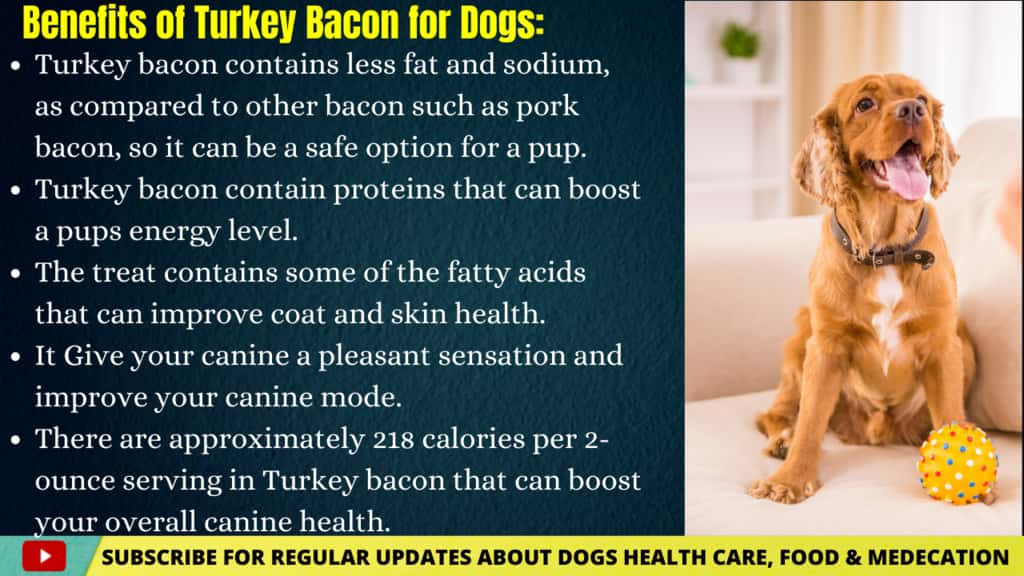 Benefits of Turkey Bacon for Dogs