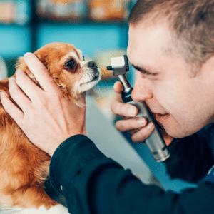 dog's eyelid swollen