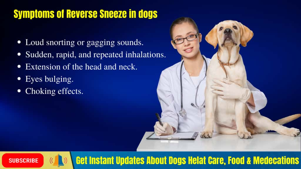 Sudden onset of Reverse sneezing in Dogs