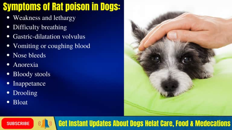Symptoms of Rat poison in Dogs