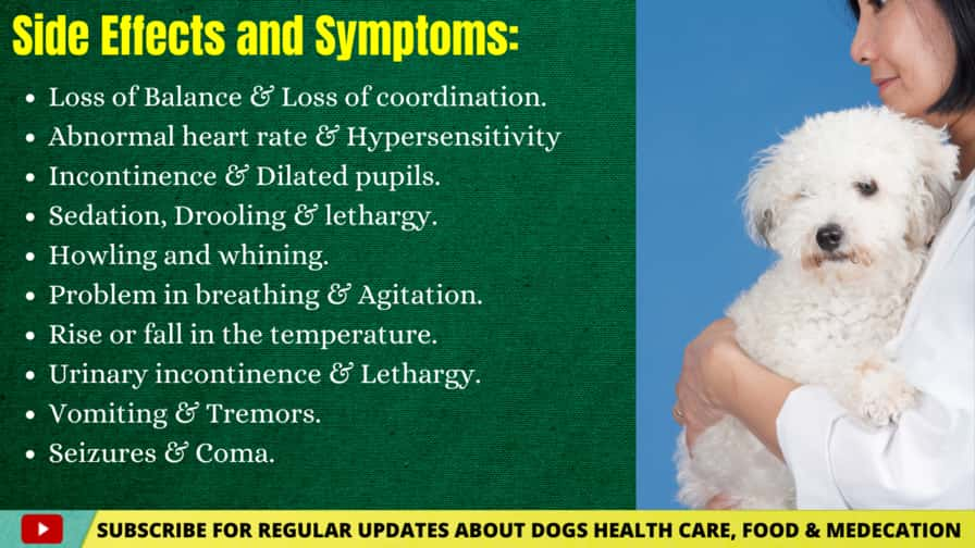 Side Effects and symptoms of THC For Dogs