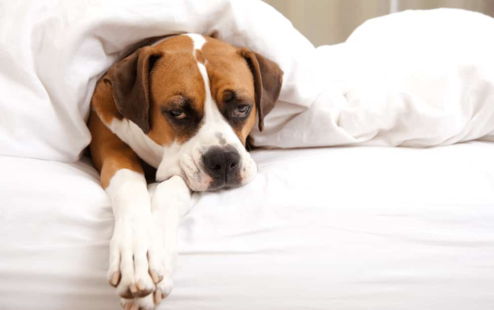 How to Protect Your Dog from Separation Anxiety
