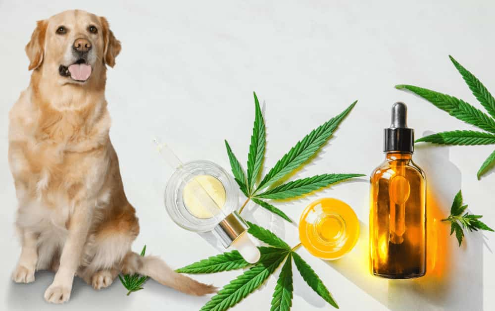 How to Use CBD Oils for Dogs