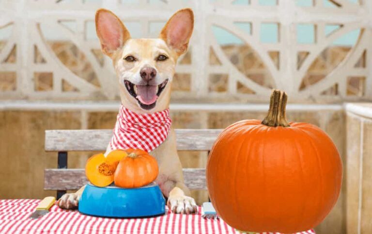 How much pumpkin for Dogs