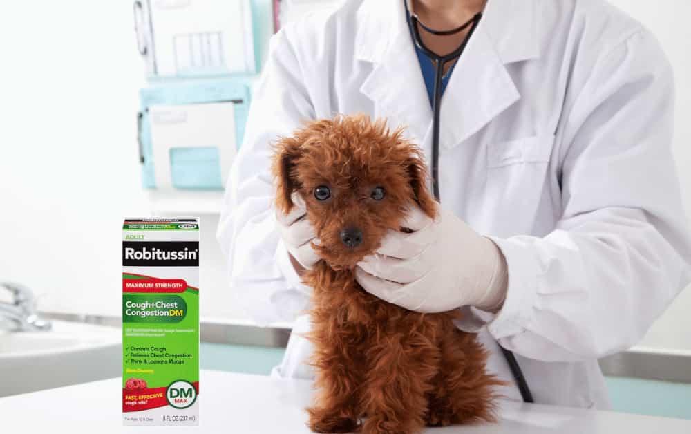 Dextromethorphan for dogs