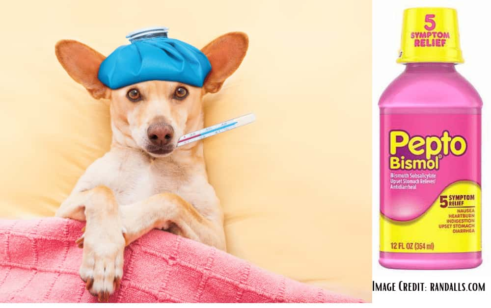 How much Pepto Bismol for dogs?