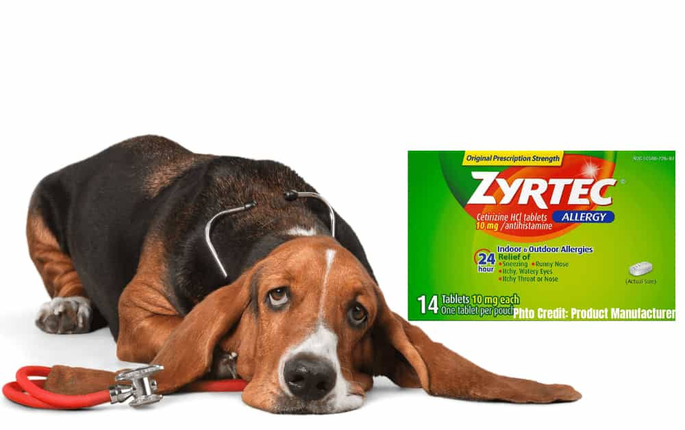 zyrtec dosage for dogs