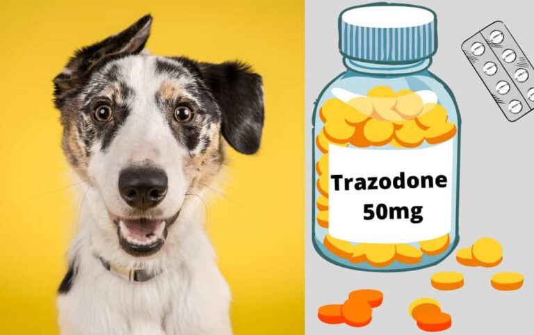 Trazodone for dogs