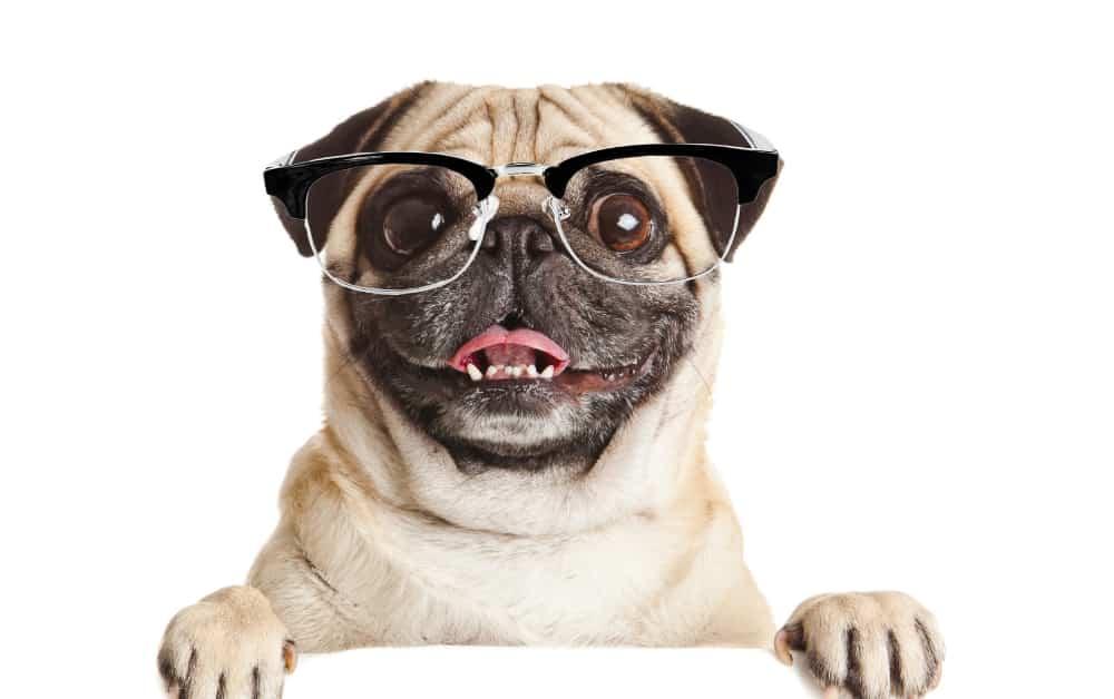 Happy dog in glasses